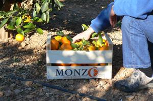 Naranjas online Hermamos Monzo